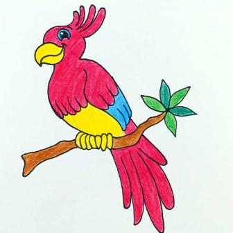 Parrot Pets Crafty Wednesday